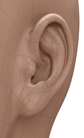3D computer model of human ear